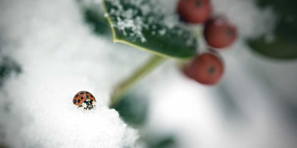 Where do insects go in the winter