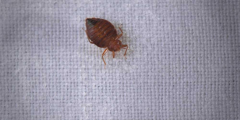 Insectes à surveiller dans votre maison cet hiver