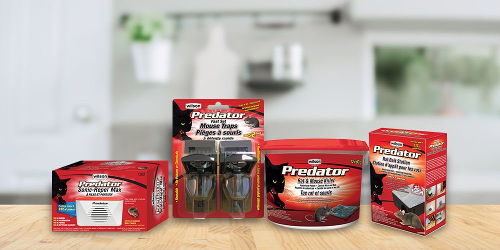 How to get rid of rats and mice with predator products