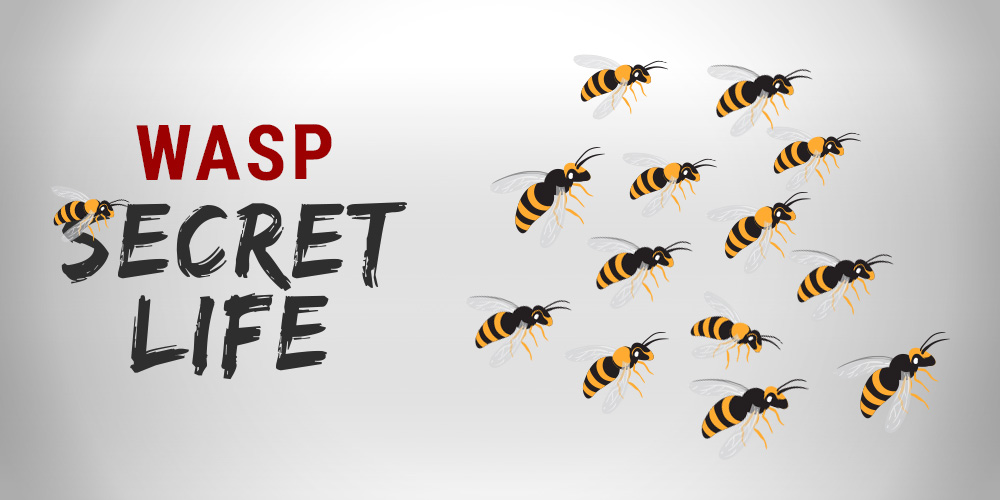 The secret life of wasps